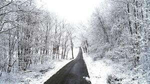 1209 SNOWY ROAD KURT IMMLER